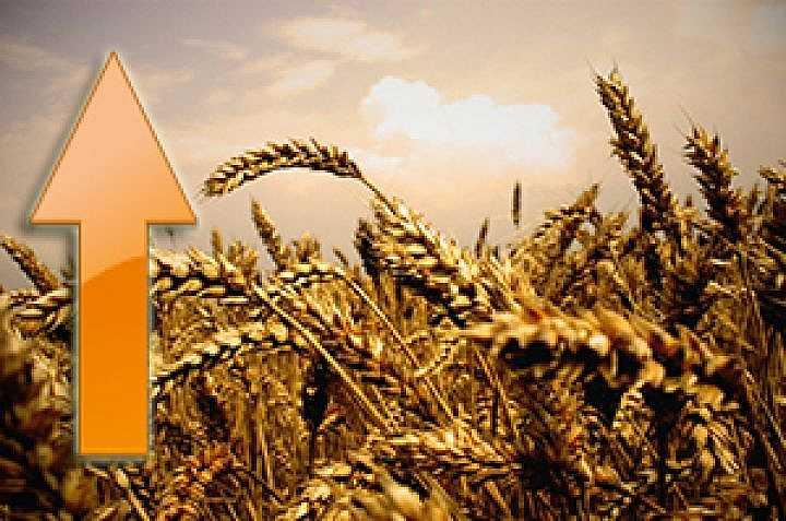 Как увеличить урожайность